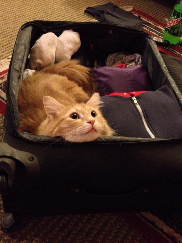 Домашние животные, которые не хотят отпускать хозяина в поездку