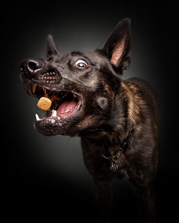 Собаки забавно ловят вкусняшки