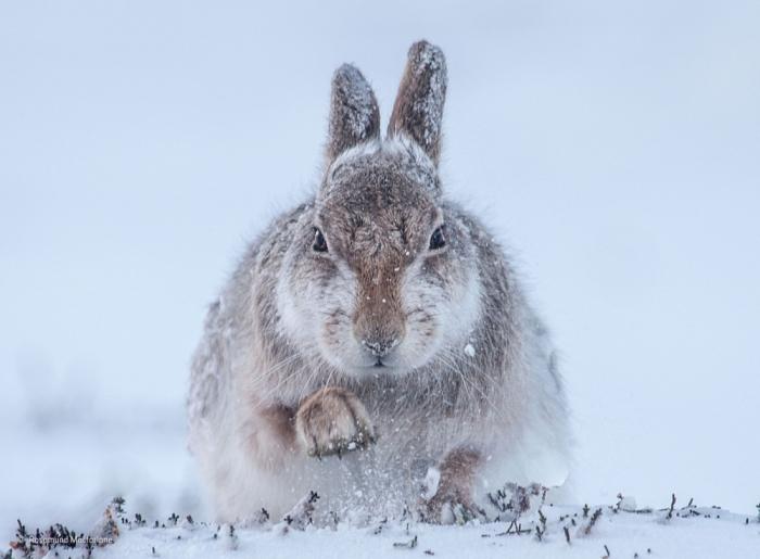 Лучшие фотографии диких животных