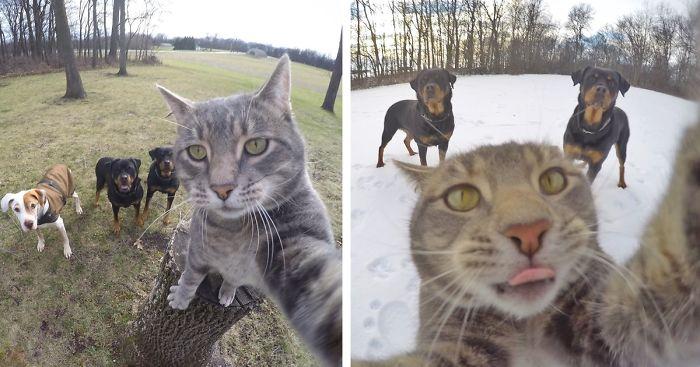 Кот, который знает толк в селфи!