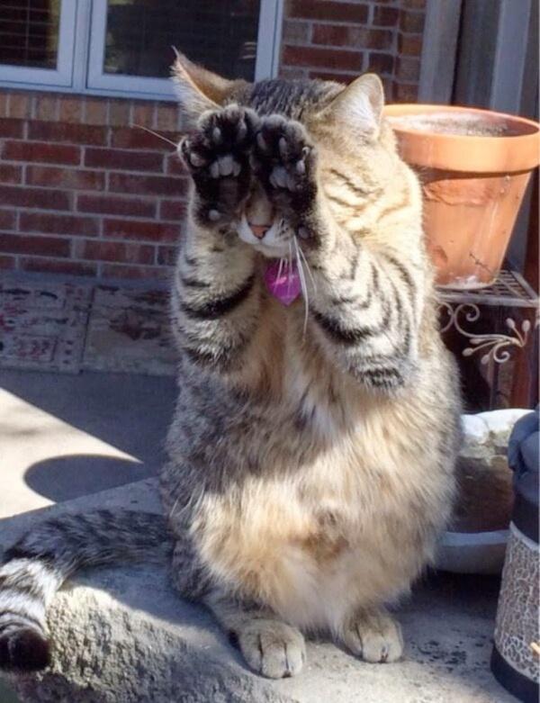 Позитивные фотографии с котами