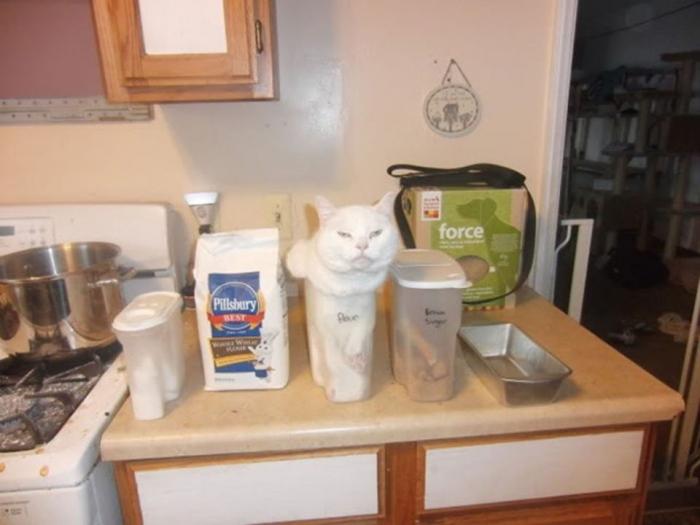 Коты, которые плевали на вашу логику