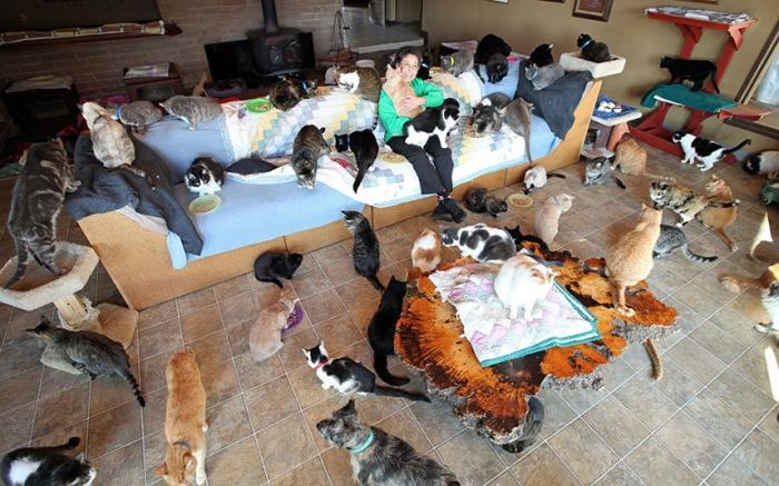 История женщины, которая живет с 1100 котами