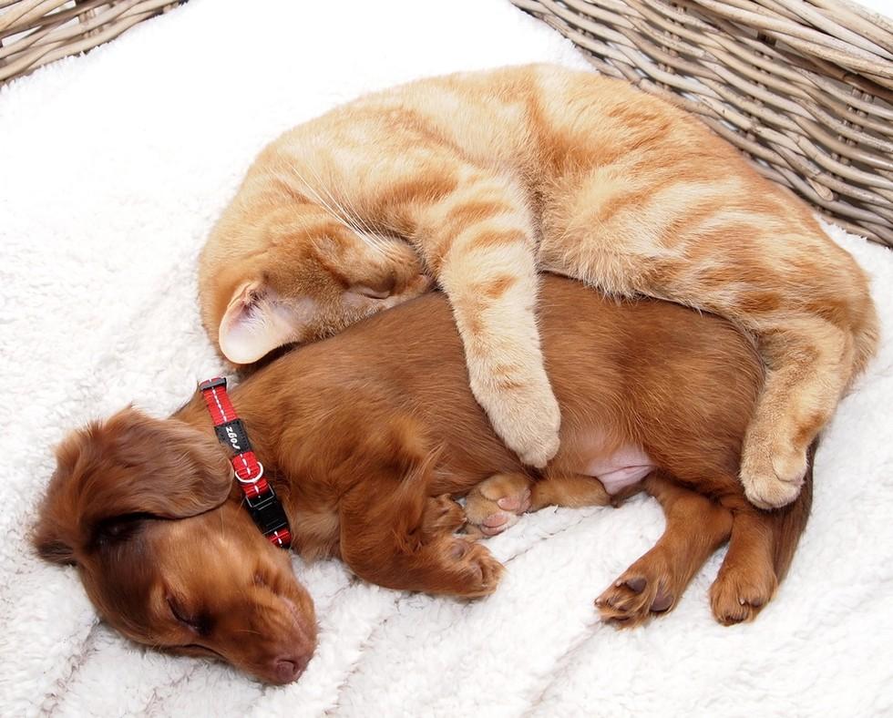Картинка влюбленные кот и собака