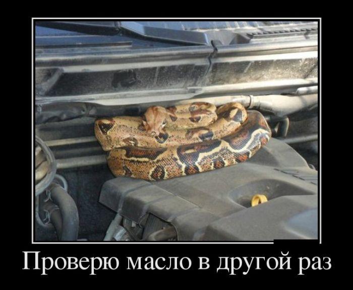 ПОДБОРКА ПРИКОЛЬНЫХ ДЕМОТИВАТОРОВ за 19.02.14