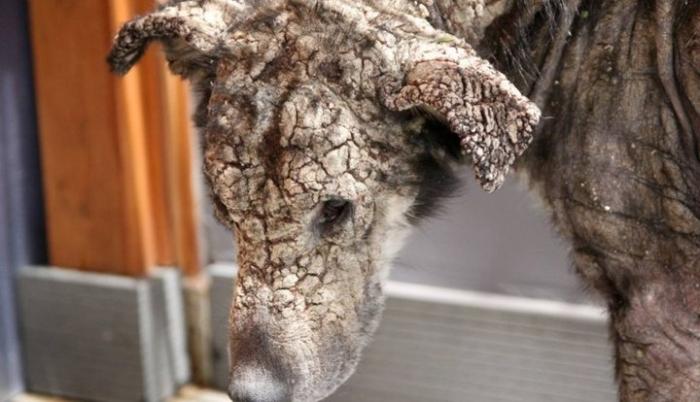Спасение собаки с «окаменевшей» мордой
