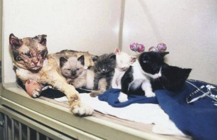 Удивительная история об отважной кошке