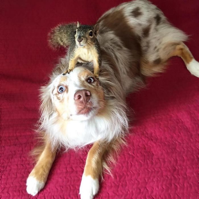 Собака и белка — лучшие друзья