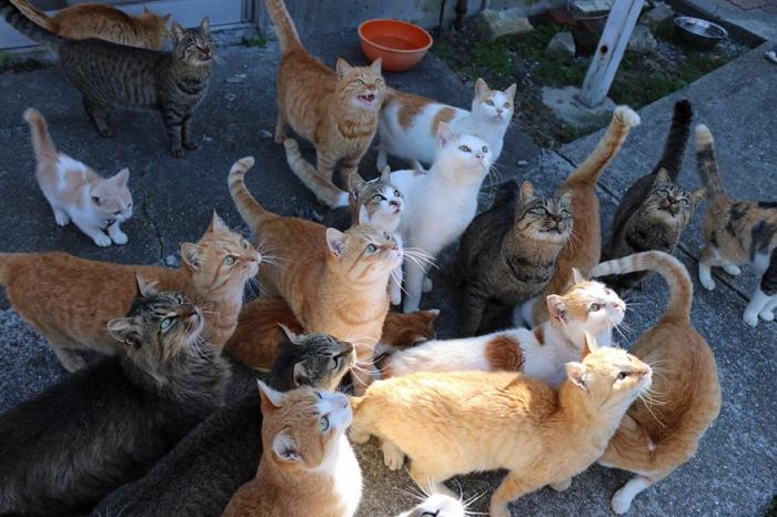 Японский кошачий остров завалили коробками с кормом