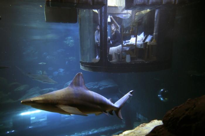 Романтический ужин и ночь с акулами в Париже