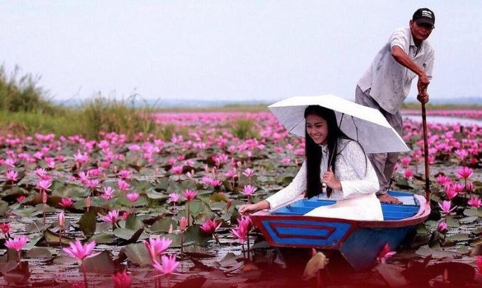 Озеро красных лотосов в Таиланде