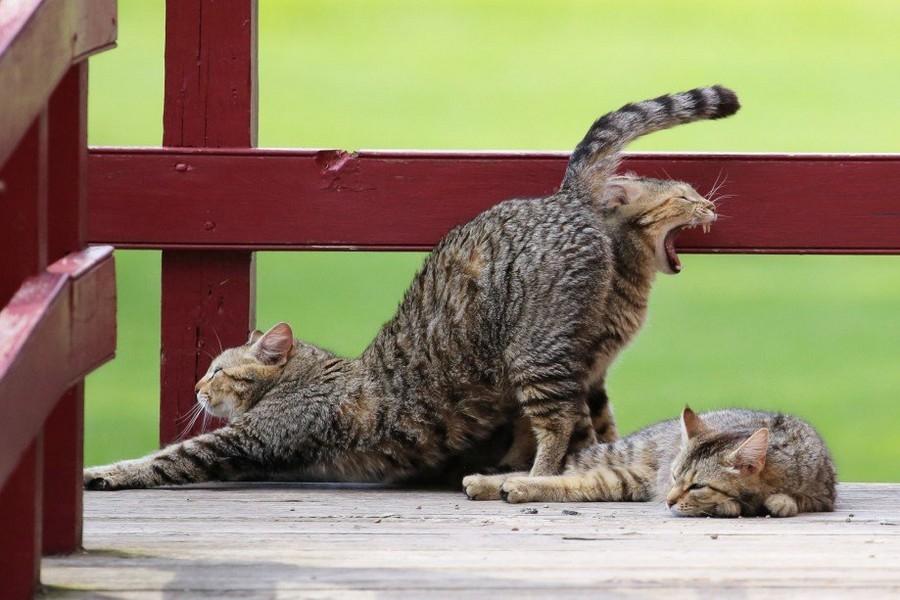 Картинки приколы про котиков