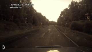 Автомобилисту на одной дороге попались лось и бобер