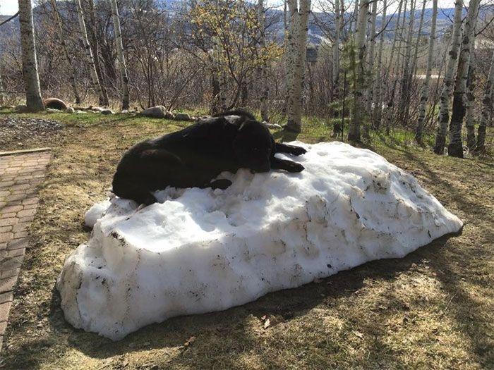 Собака, которая очень любит снег