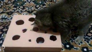 Самодельная игрушка для кота из картонной коробки