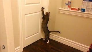 Подборка: Коты открывают двери в домах