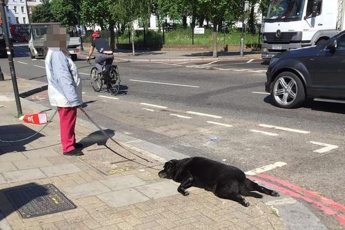 В Лондоне женщина тащила за собой мертвую собаку