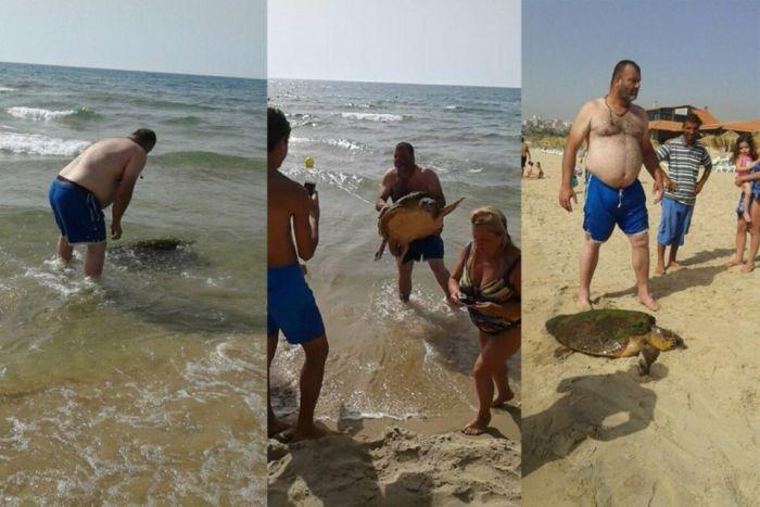 В Ливане отдыхающие до полусмерти замучили черепаху, делая с ней селфи