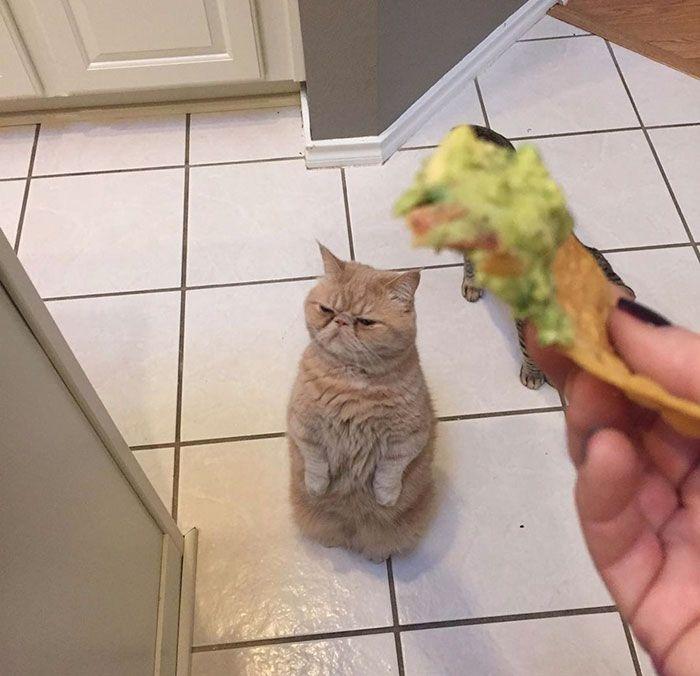 Кот по кличке Джордж предпочитает крепко стоять на задних лапах