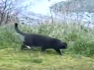 Кот не решился отобрать у орла рыбу