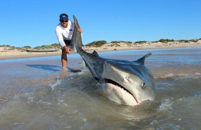 ловля акул на сеть
