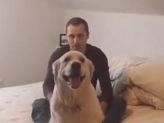 Тест на доверие с псом