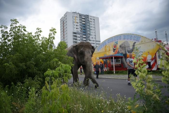 Слон на улицах Берлина
