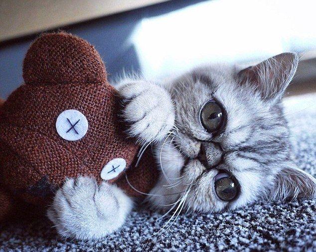 Удивленный кот по кличке Герман