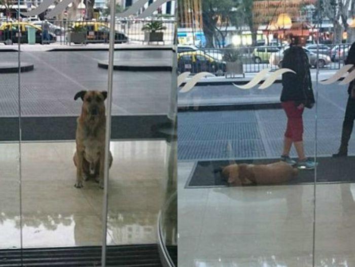 Стюардесса из Германии забрала бездомного пса, который полгода ждал ее у от ...