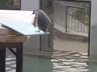 Нерешительный пингвин