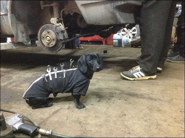 Креативные владельцы собак, которые делают для своих питомцев прикольные шт ...