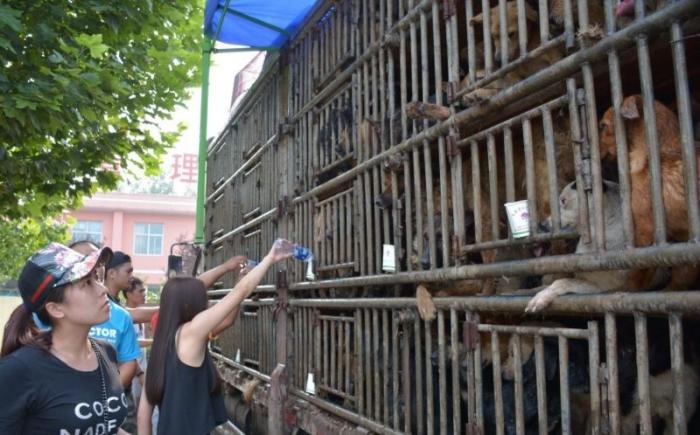 Активисты задержали грузовик с четырьмя сотнями собак, направлявшийся на ск ...