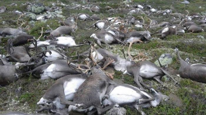 Мощный удар молнии убил стадо из 323 оленей