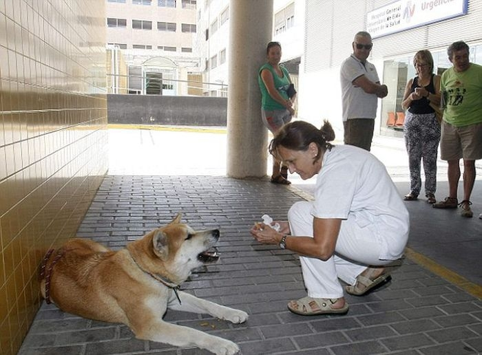 Собака 6 дней ждала хозяйку у дверей больницы