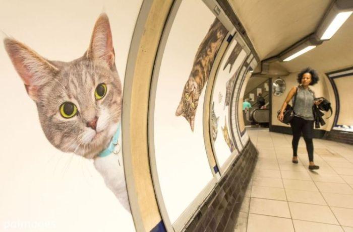 Станцию лондонского метро украсили фотографиями кошек из приютов