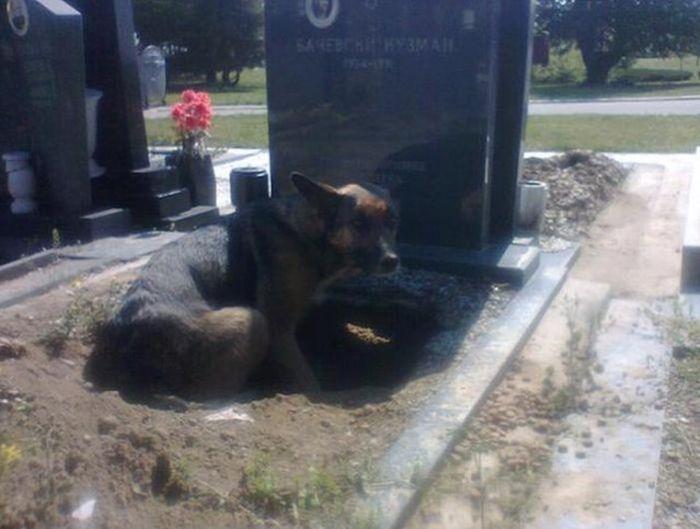 Сербская зоозащитница спасла собаку, поселившуюся на могиле умершего хозяин ...