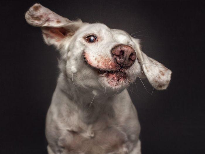 Собаки ловят лакомство