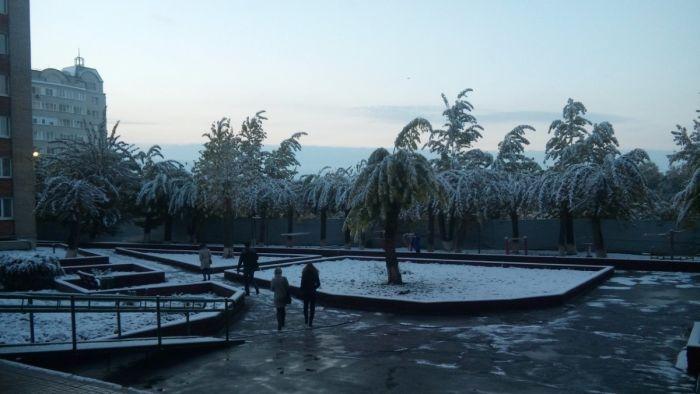 Первый снегопад в Омске «превратил» деревья в пальмы