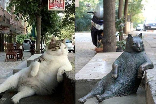 В Турции установили монумент отдыхающему коту