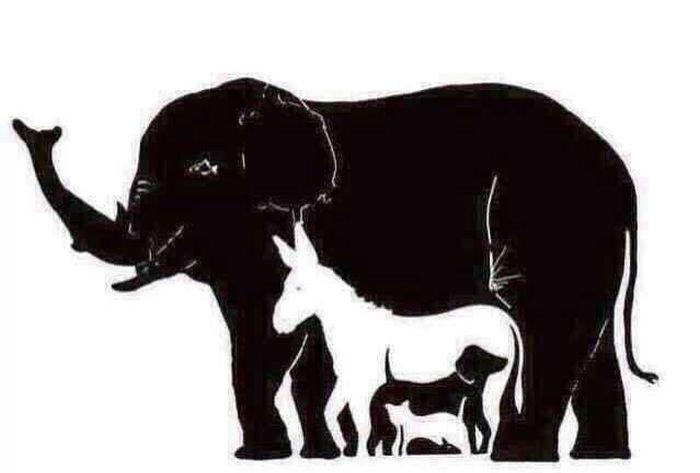 Сколько животных вы видите на этой картинке?