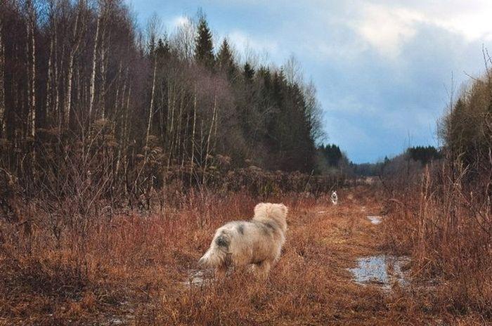 Непредсказуемая погода Северо-Запада России