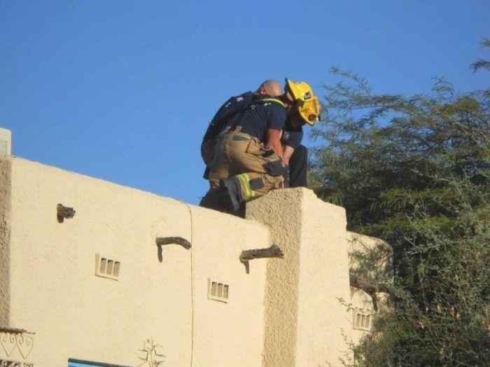 В США спасатели достали из дымохода «домовенка Кузю»