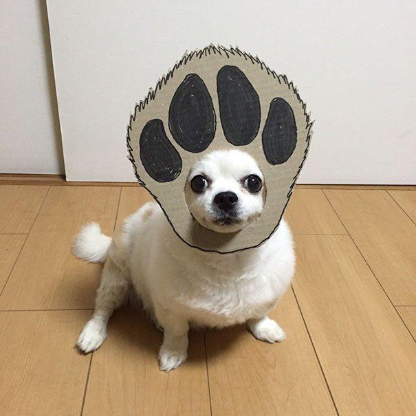 Собака примеряет новые образы