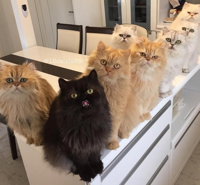 «Кошачья мама на полный день» и ее 12 кошек