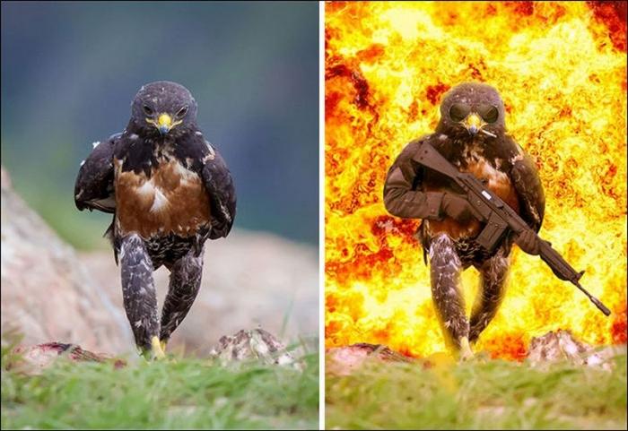 Шагающий ястреб стал героем фотожаб