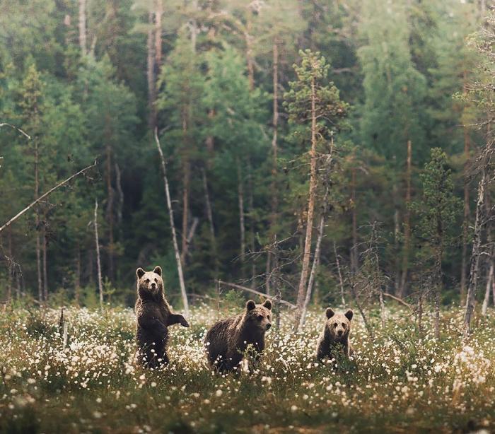 Душа леса: фотограф Конста Пункка