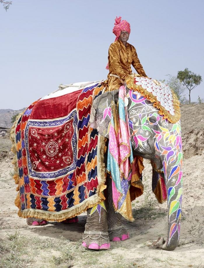 Слоновий боди-арт от индийских умельцев