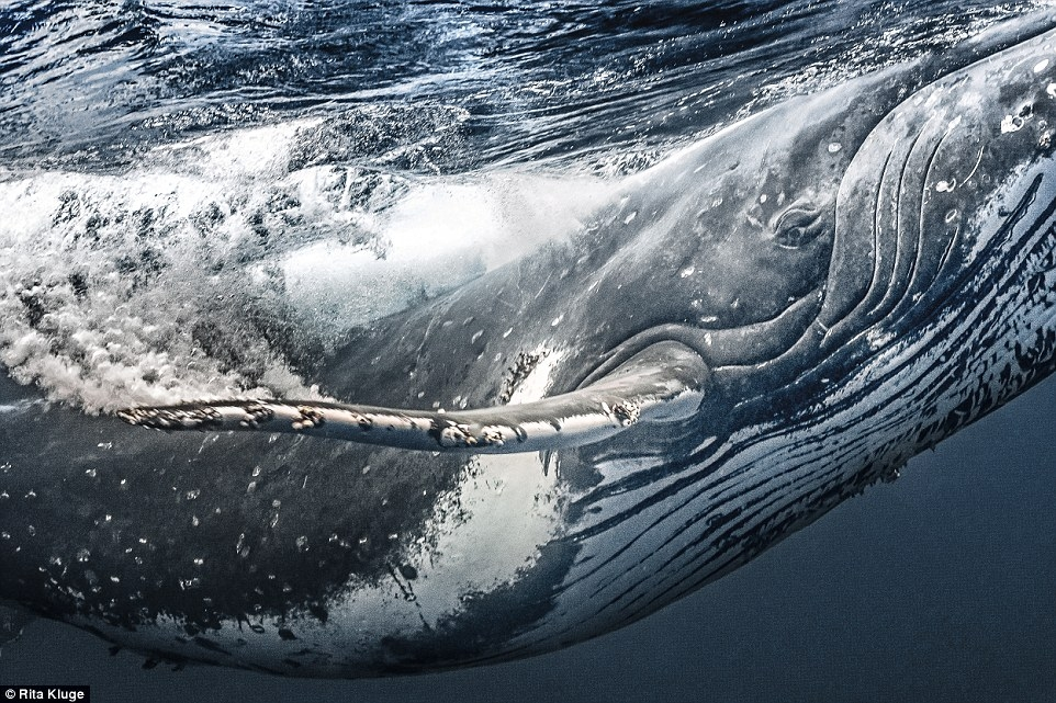самое лучшее фото с китом на журнале имеющиеся таблички
