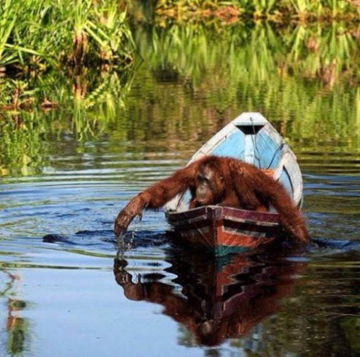 Лодки смешные картинки, дню участковых