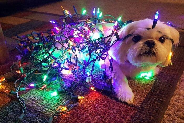 Животные в ожидании Рождества и Нового года